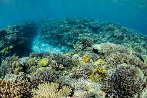 「ポパイ」の浅瀬に群生している色とりどりのサンゴ