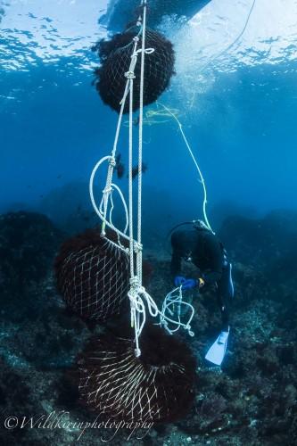 いっぱいになったスカリを船から垂らしているロープに結び、新しいスカリに変えていく