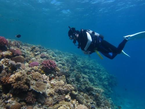 5年ほど前に撮影した水納島「ポパイ」のサンゴ(撮影/関戸紀倫)