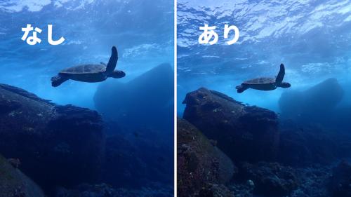 優雅に泳ぐウミガメと、水面からテトラポッドまで幅広く写ります。奥行きや臨場感が感じられる写真に。