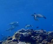 次の記事: 【動画あり】ウミガメの集団クリーニングシーンの動画が癒される