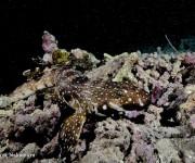 """次の記事: パプアニューギニアでは、この""""生物""""写真を狙え!中村卓哉が選"""