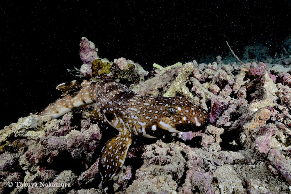 """パプアニューギニアでは、この""""生物""""写真を狙え!中村卓哉が選ぶ写真映えするダイビングポイントBEST5"""