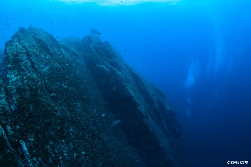 60Mまで一気に落ちているドロップオフ、実はこれは一枚岩というから驚き!
