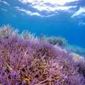 沖縄県宮古島の水中風景