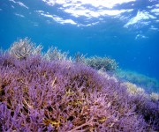 次の記事: 宮古島のダイビングサービス、「生物多様性アクション大賞201