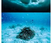 次の記事: 水中写真家・古見きゅう写真展「JAPAN'S SEA」開催!