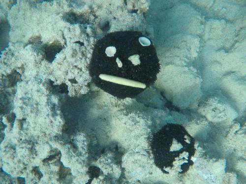 海底にいるウニたちが何かを乗せてる様子が顔みたい!