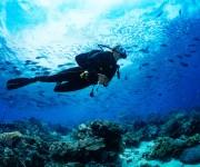 前の記事: 【アンケート】ダイバーの海洋環境問題&海洋景観への認識を教え