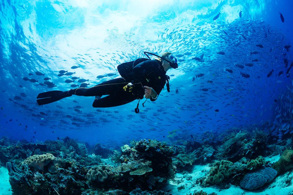 【アンケート】ダイバーの海洋環境問題&海洋景観への認識を教えてください〜Amazonギフト券当たる!〜