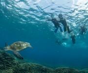 前の記事: 子どもと一緒にシュノーケリングがしたい!未就学児と美しい水中