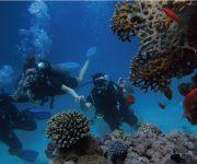 次の記事: 観光庁が「訪日外国人等に対する体験ダイビング及びスノーケリン