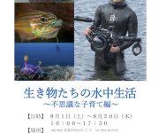 前の記事: 水中写真家・堀口和重の写真展「生き物たちの水中生活~不思議な