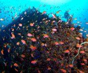 前の記事: 土肥の期間限定ポイント 「とび島沖PartⅡ」