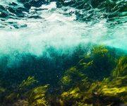 次の記事: 九州発!海藻の未使用資源の破棄を防ぐストレスフリーコスメ誕生