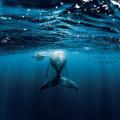 水中写真家・岡田裕介写真展「これが君の声 青の歌-Sound of echo, Song of Blue-」開催