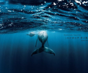 次の記事: 【ランキング】2020年9月に人気だった海やダイビングのニュ