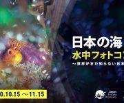前の記事: 日本政府観光局が「日本の海 水中フォトコンテスト2020~世