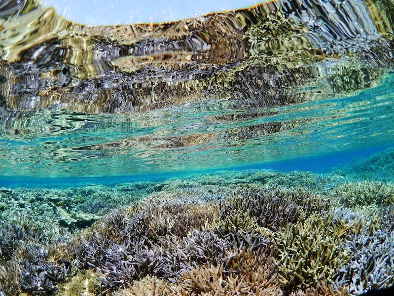 各地のガイドに聞く今シーズンの海の様子は! -2020年 現地の海から 【宮古島Ⅱ】編-