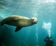 前の記事: いつかは一緒に泳ぎたい海獣特集