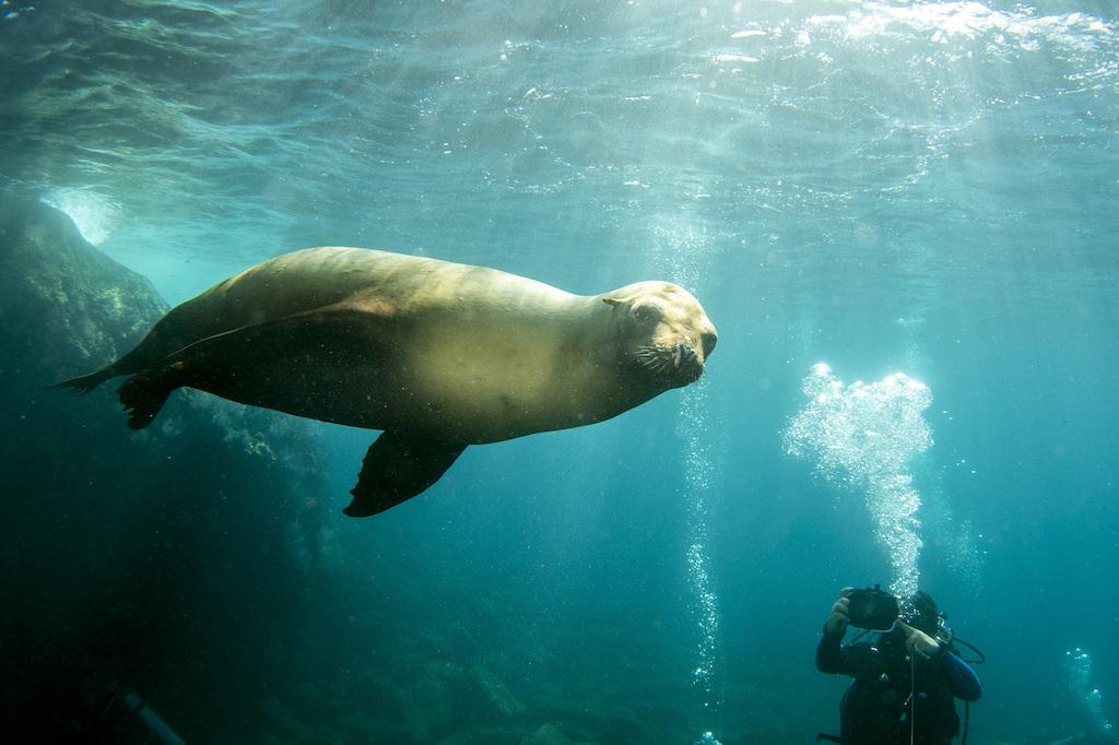 いつかは一緒に泳ぎたい海獣特集