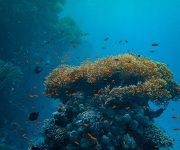 次の記事: 「海洋プラスチック」の存在について、私たちが知っておきたい8