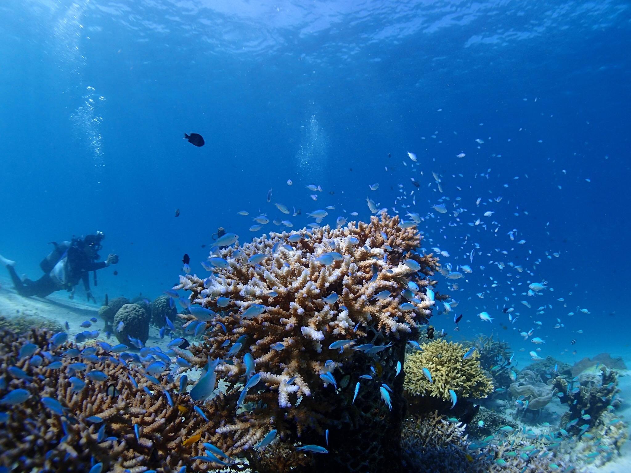 各地のガイドに聞く今シーズンの海の様子は! -2020年 現地の海から 【沖縄Ⅱ】編-