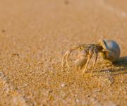 前の記事: アプリ「Biome」で砂浜の生き物を大調査!