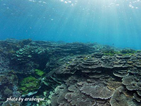 底土ビーチ サンゴ,ダイビングショップアラベスク