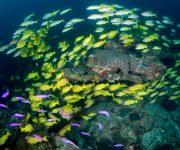前の記事: 原始の自然溢れる屋久島。豊かな森が育む魚種豊富な海。