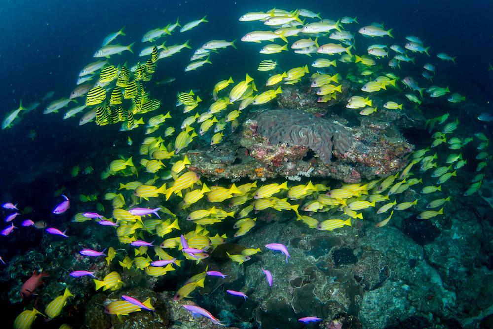 原始の自然溢れる屋久島。豊かな森が育む魚種豊富な海。