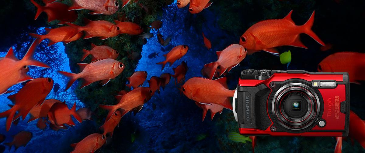 """【""""ミスターオリンパス水中""""清水淳のカメラレビュー】オリンパスカメラTG-6 + PT-059"""