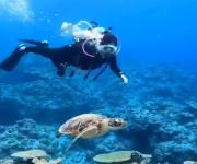 前の記事: 穏やかな水中散歩が一転⁉ウミガメに起こった珍劇に思わず笑いが