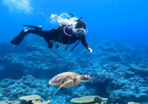 Diver's guide guma