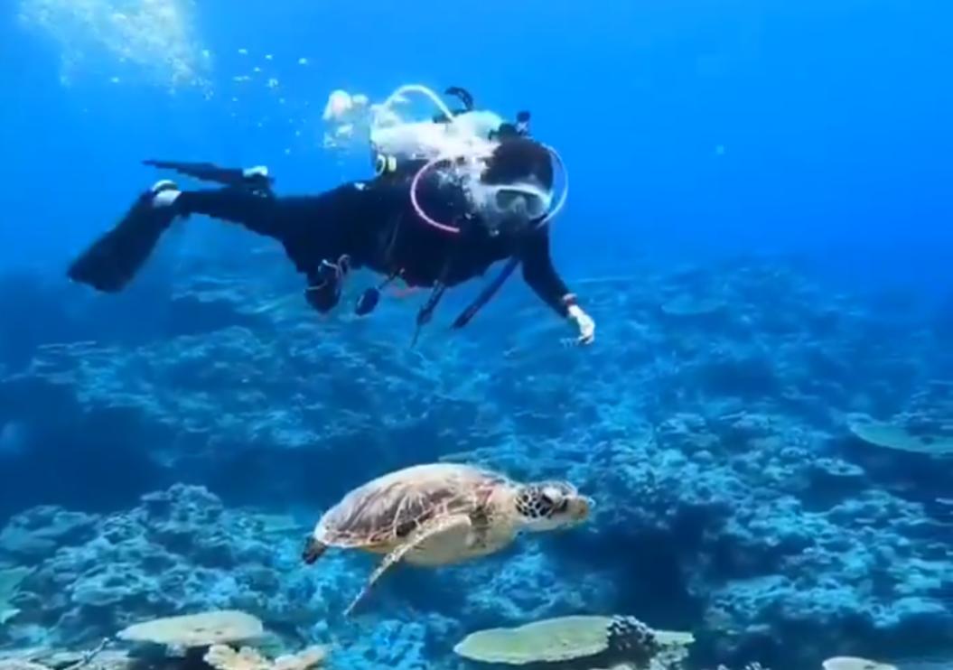 穏やかな水中散歩が一転⁉ウミガメに起こった珍劇に思わず笑いが…