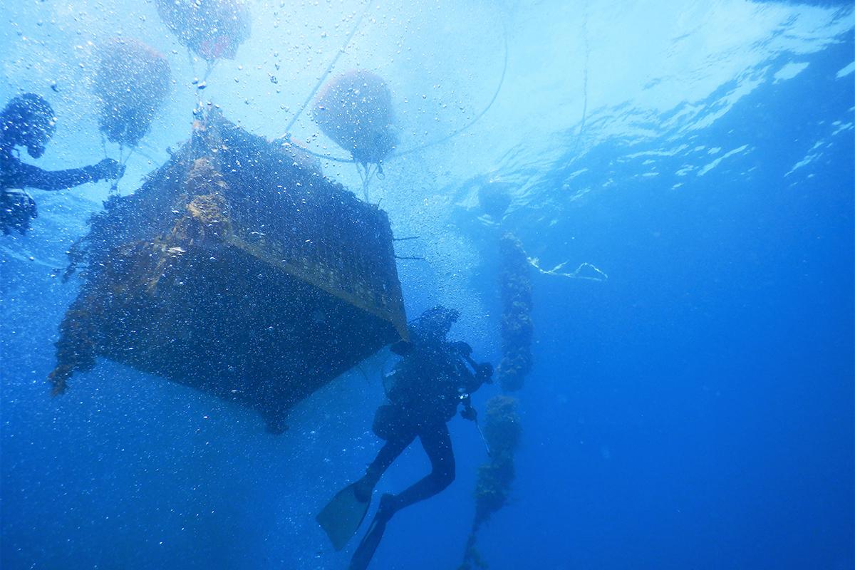 """""""海の神秘""""を飲む。海底酒「サブリナ ACT2 2016」が限定販売開始"""