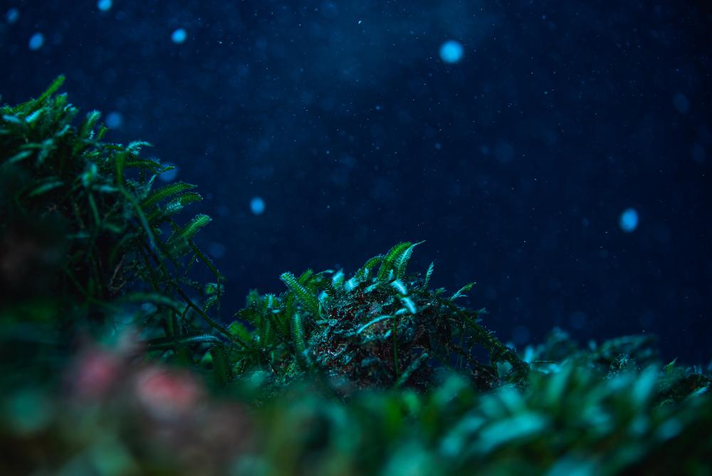 ライティングなしで撮影されたというチャレンジ一等賞入賞作品。「グッとくるものがあった」と石野さん