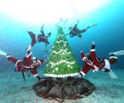 次の記事: 【2020年】水中クリスマスツリーがあるダイビングポイント特
