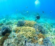 前の記事: 【ランキング】2020年12月に人気だった海やダイビングのニ