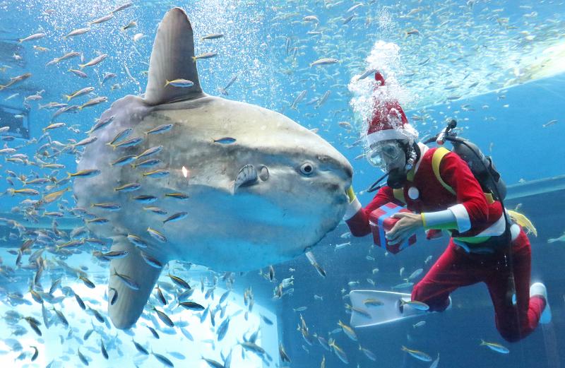 「八景島シーパラダイス」でクリスマスイベント開催中