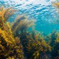 海の森「藻場」を育てて守ろう~ダイバーとしてできること~ Vol.1 海底に森?!海の森、「藻場」とは?