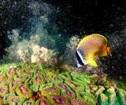 次の記事: 「日本の海」水中フォトコンテスト2020入賞作品発表。審査員
