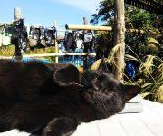 前の記事: 【2月22日は猫の日】ダイビングショップのネコスタッフ特集