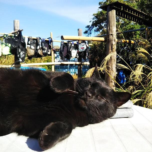 【2月22日は猫の日】ダイビングショップのネコスタッフ特集