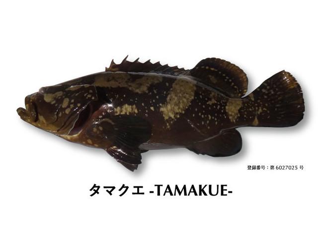 タマクエ2