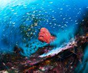 前の記事: 写真展『海から見たニッポン』で知る、日本列島を取り巻く海の姿