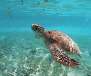 前の記事: オーストラリアのウミガメ保全プロジェクトの全貌に迫る!