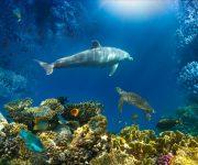 前の記事: サンゴ礁保全/再生活動の最前線。サンゴマップにサンゴ取引プロ
