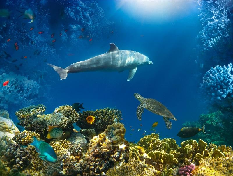 サンゴ礁保全/再生活動の最前線。サンゴマップにサンゴ取引プログラムって一体なに!?