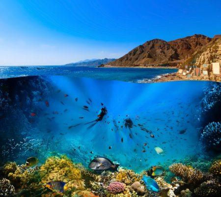 サンゴ再生/保全